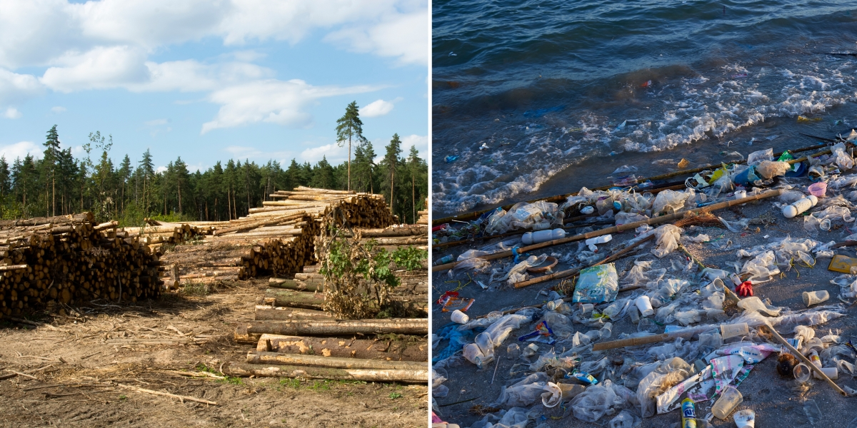 conventional paper and packaging leads to deforestation and plastic waste in oceans